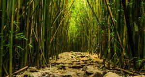 Pano2.Whispering Bamboo